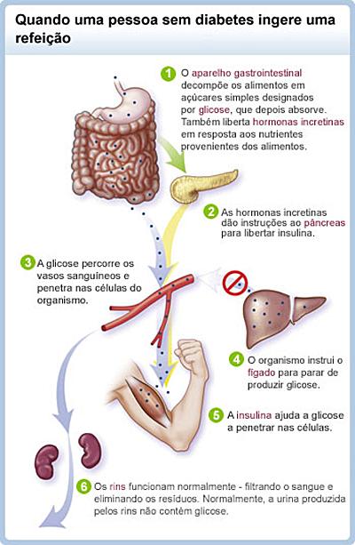 alimentos para personas con acido urico acido urico rinon histologia
