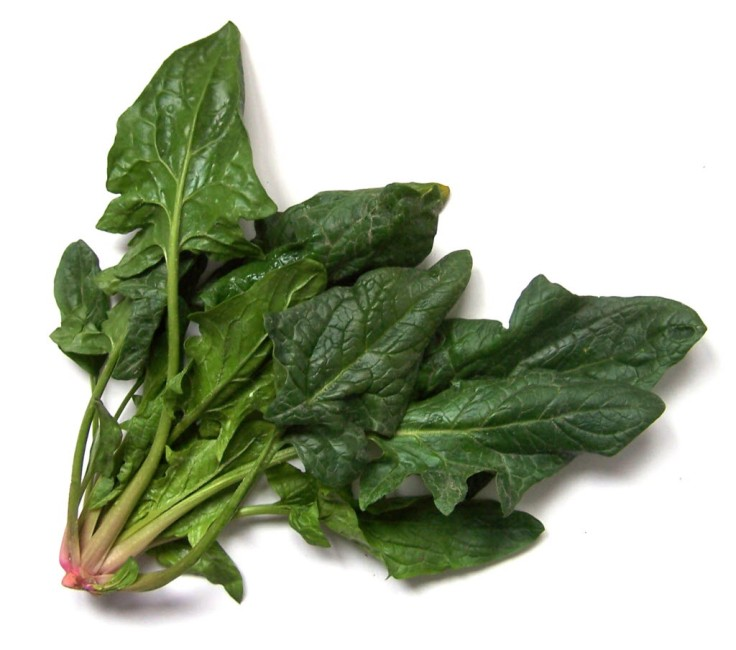 spinach_1340138476